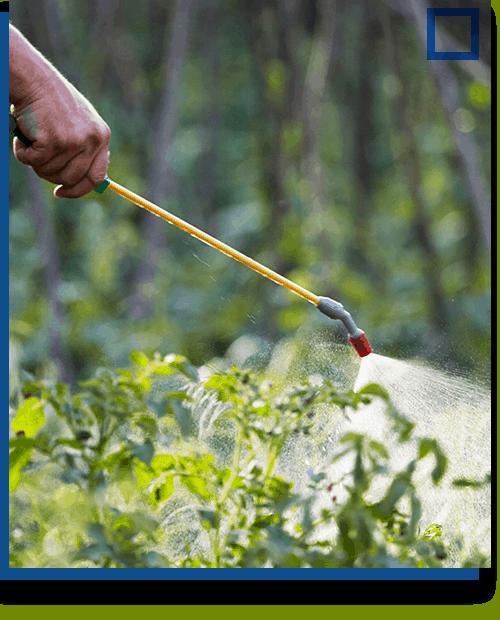 Lawn Spraying Img2
